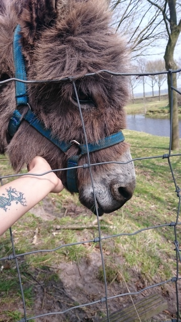 Met a lovely new friend at Fort Bourtange, Groningen, Netherlands