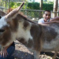 Mama the gentle donkey