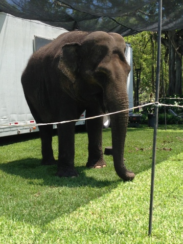 Communing with an indian elephant to ease the tension during finals @ the University of Miami.