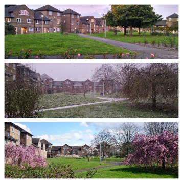 Autumn, winter, and spring; Breath-taking seasonal variations in Darwin Courtyard at the University of Kent, Canterbury, Kent, England