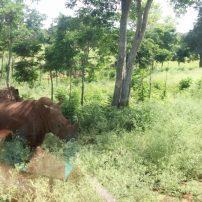 Rhinoceros sightings at Cuba's Zoológico de la Habana.