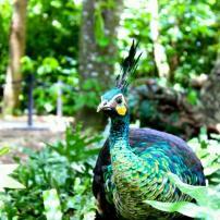 The stunning green peacock. Photo taken by Alexandra Cruz
