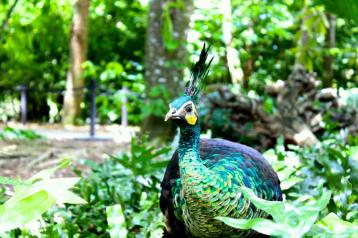 The stunning green peacock. Photo taken by Alexandra Cruz