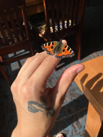 Wonderful chance encounter with a stunning tortoiseshell butterfly